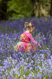 Little girl in a wood filled with spring bluebells Royalty Free Stock Image