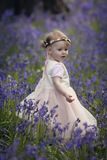 Little girl in a wood filled with spring bluebells Royalty Free Stock Photography