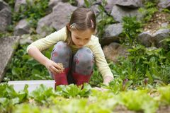 Little girl working in the garden. Little girl holding a handful of straw mulch and protecting garden bed against drought. Natural childhood concept, outdoor stock photography