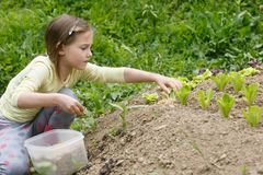 Little girl working in the garden royalty free stock photos