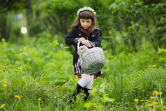 A little girl in a wreath observes a rabbit in a basket at sunset in a park. Royalty Free Stock Photo