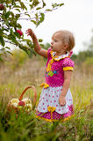 Little girl years to pick apples Royalty Free Stock Image
