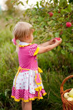 Little girl years to pick apples Royalty Free Stock Photo