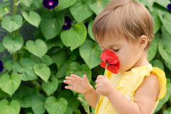 Little girl in yellow dress smelling red poppy flower Royalty Free Stock Image
