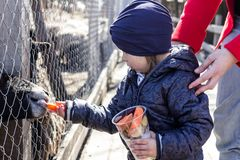 Little girl at the zoo. Little girl feeding animals at the contact zoo stock images