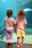 Little Girls at Aquarium. Two little girls look through the aquarium glass at fish Stock Image