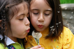 Little girls are blowing dandelion seeds Stock Images