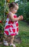 Little girls picked tomatoes Stock Photos