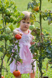 Little girls picked tomatoes stock images