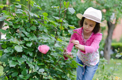 Little girls pruning roses Stock Images