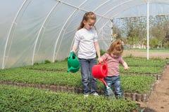 Little girls watering stock photos