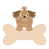 Little glamour tan Shih Tzu dog and big bone. Royalty Free Stock Images