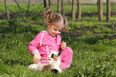Little goat pet and child Royalty Free Stock Images
