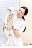 Little goat at the vet Royalty Free Stock Photography