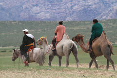Little Gobi desert camel walk Royalty Free Stock Photos