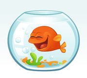Little Goldfish (Cheerful) stock photography