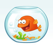 Little Goldfish (Laughing) royalty free stock photo