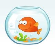Little Goldfish (Smiling) Royalty Free Stock Photos