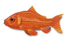 Little goldfish. In the water Royalty Free Stock Images