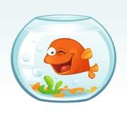Little Goldfish (Winking) Stock Photography