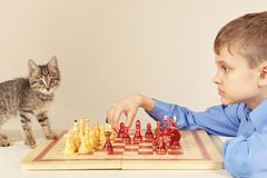 Little grandmaster with kitten plays chess. Stock Photography