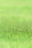Little grass on green sward Stock Image