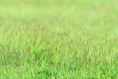 Little grass on green sward Royalty Free Stock Photo