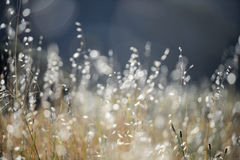 Little grass in soft focus Royalty Free Stock Images