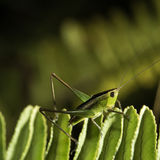 The little grasshopper. Stock Photos