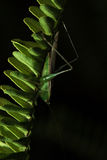 The little grasshopper. Stock Photo