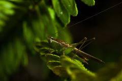 The little grasshopper. Stock Photography