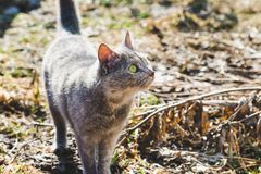 Little gray cat with green eyes in the spring garden royalty free stock photo