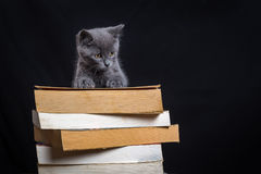 A little gray cat on a pile of books Stock Photo