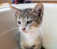 Little gray cute kitten in bucket Royalty Free Stock Photo