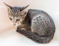 Little gray cute kitten in bucket Stock Photo