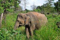 Little gray elephant hiding in green grass in park Stock Photos