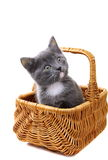 Little gray kitten in a basket. Royalty Free Stock Photo