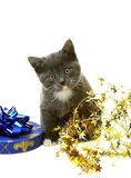 Little gray kitten in a gift box. Stock Photos