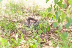 little gray kitten in the grass stock photography