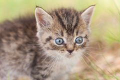 Little gray kitten in the grass royalty free stock images