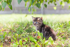 Little gray kitten in the grass stock photography