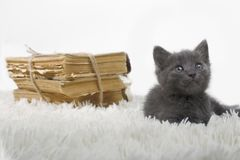 A little gray kitten lies with books stock images