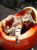 Little gray kitten lies in a red potty. Little gray kitten lies in a red children`s potty royalty free stock image