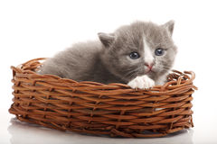 Little gray kitten Royalty Free Stock Photo
