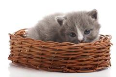 Little gray kitten Royalty Free Stock Photography