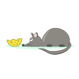 A little gray mouse and cheese Royalty Free Stock Photos