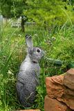 Little gray rabbit. A gray rabbit sits in a herb bed Stock Images