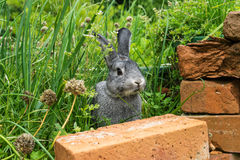 Little gray rabbit. A gray rabbit sits in a herb bed Royalty Free Stock Photo
