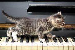 Piano cat. Musician, music. Stock Photos