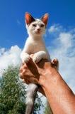 Little Greek cat Stock Image